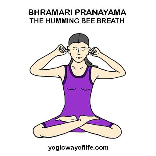 Bhramari Pranayama - Humming Bee Breath