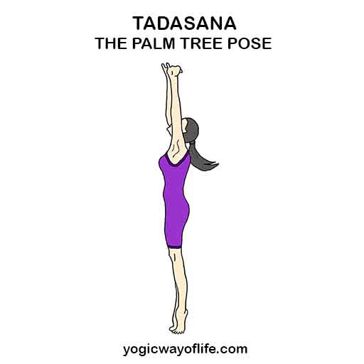 TADASANA - Palm Tree Pose