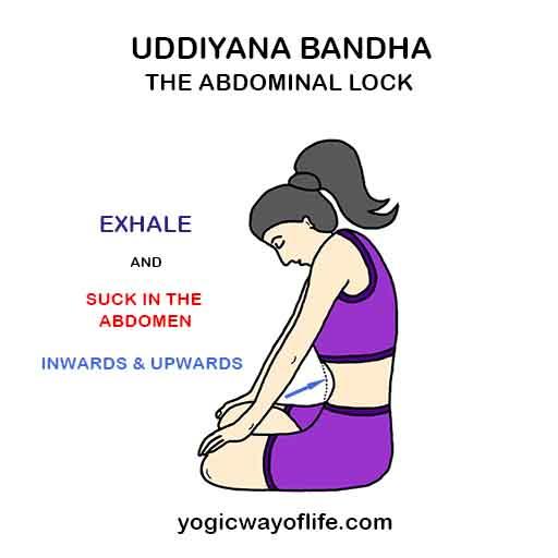 Uddiyana bandha - Abdominal Lock