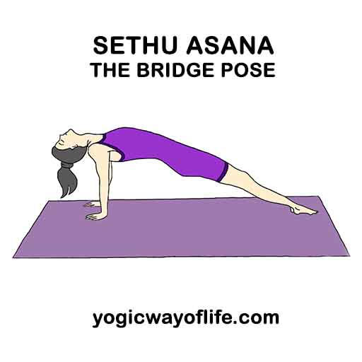 Setu Asana - bridge pose