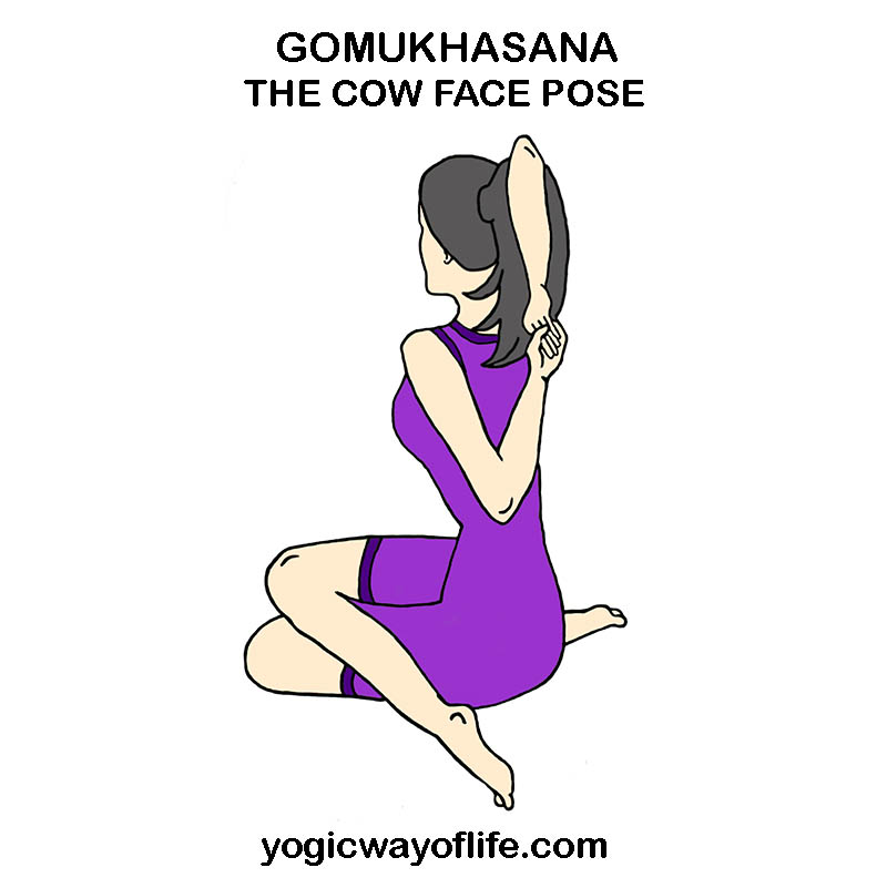Gomukhasana - Cow Face Pose