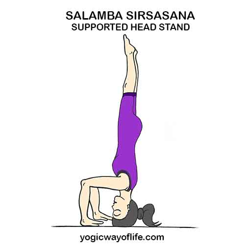 Salamba Sirsasana - Supported Head Stand