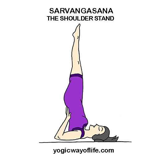 Sarvangasana - Shoulder Stand