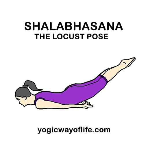 Shalabhasana - Locust Pose