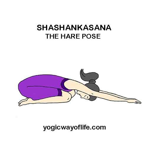 SHASHANKASANA - Hare Pose