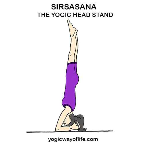 SIRSASANA - Yogic Head Stand