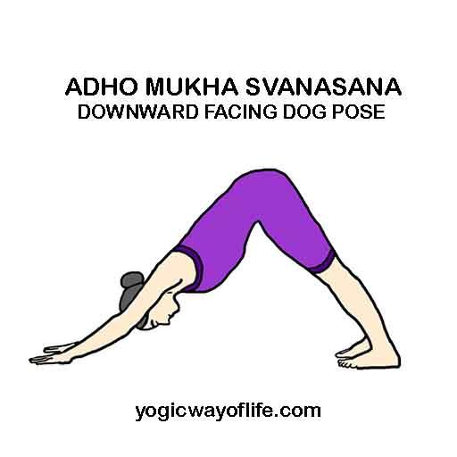 Adho Mukha Svanasana - Downward facing Dog Pose