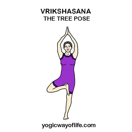 VRIKSHASANA - The Tree Pose
