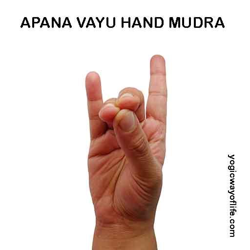 Apana Vayu Mudra - Hand Gesture