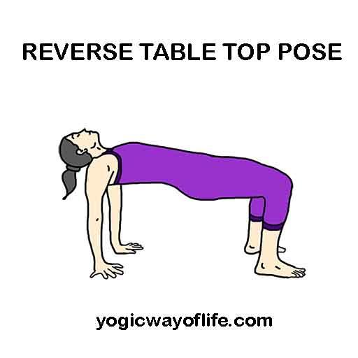 Reverse Table Top Pose - Ardha Purvottanasana