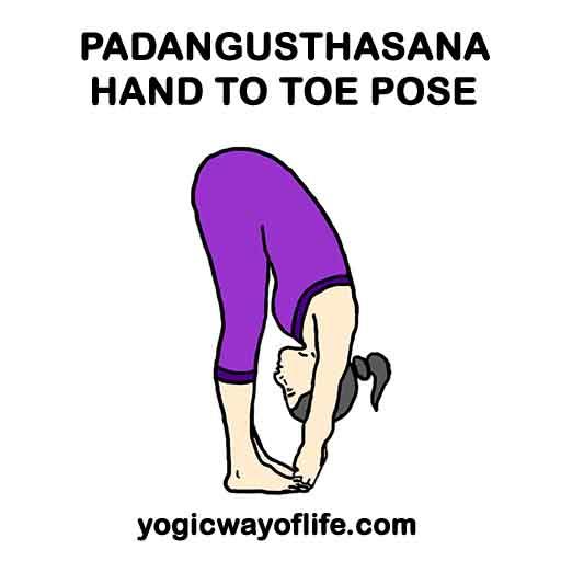 Padangusthasana - Hand to Big Toe Pose