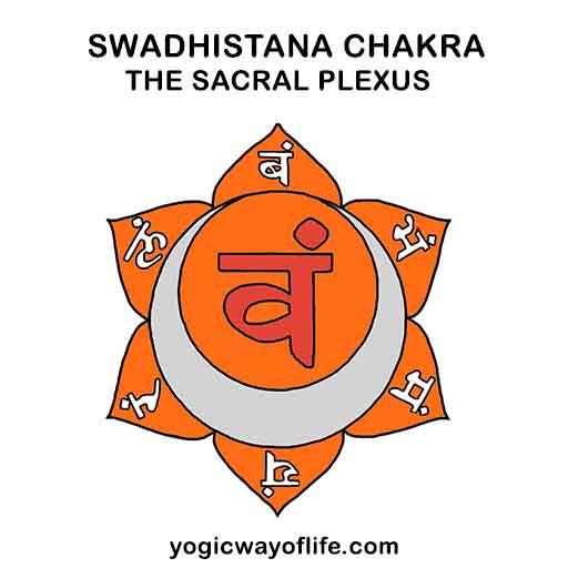 Swadhisthana Chakra -The Sacral Plexus