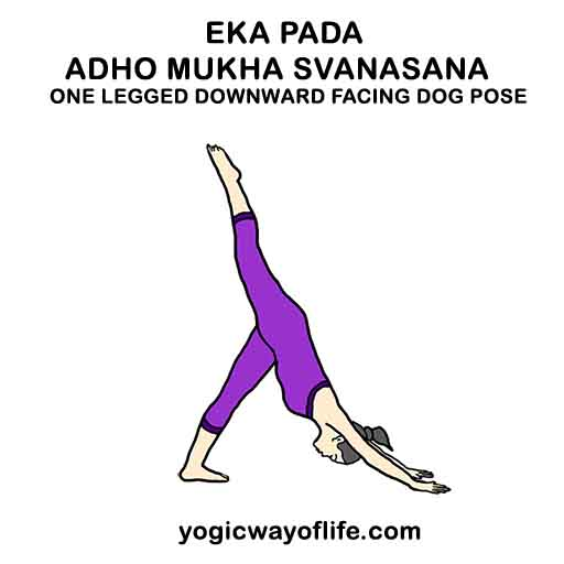 Eka Pada Adho Mukha Svanasana - One Legged Downward Facing Dog Pose