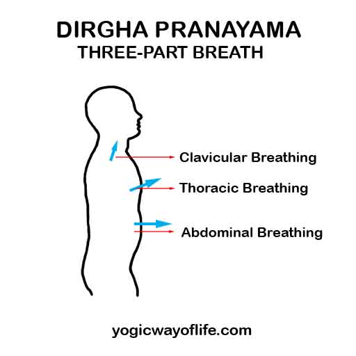 Dirgha Pranayama - Yogic Breathing - Three Part Breath