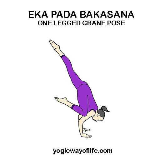 Eka Pada Bakasana - One Legged Crane Pose