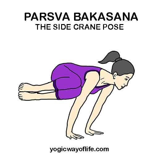 Parsva Bakasana - Side Crane Pose