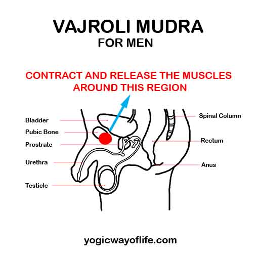 Vajroli Mudra - Thunderbolt Attitude - For Men