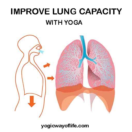 Yoga To Improve Lung Capacity Yogic Way Of Life