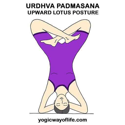 urdhva_padmasana_lotus_pose_headstand_yoga_asana-2